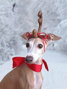 max the grinch dog head antler for christmas pets dog or cat
