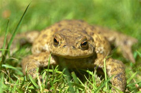 Amphibien Im Garten » Vorteile, Ansiedelung Und Mehr