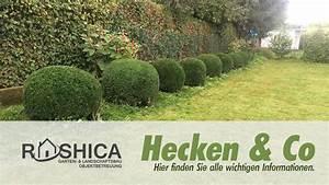 Bäume Schneiden Wann Erlaubt : liguster archive gartenbau dortmund rashica garten und ~ A.2002-acura-tl-radio.info Haus und Dekorationen