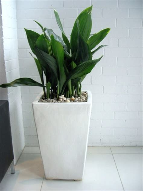 Floor Standing Planters floor standing planters perfection plant hire