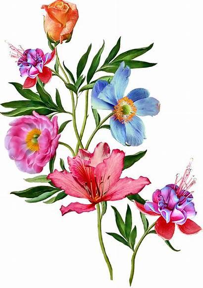Flower Flowers Clipart Watercolor Vector Paintings Botanical
