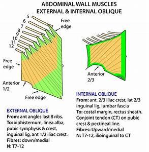Instant Anatomy - Abdomen - Areas  Organs - Abdominal Wall - Anterior