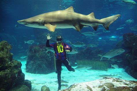 au bureau begles l aquarium de isic 28 images l aquarium de licencie