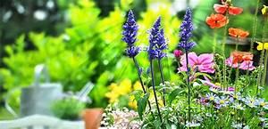Garten Blumen Bilder : expertentipps mein garten im fr hling jetzt geht 39 s los ~ Whattoseeinmadrid.com Haus und Dekorationen