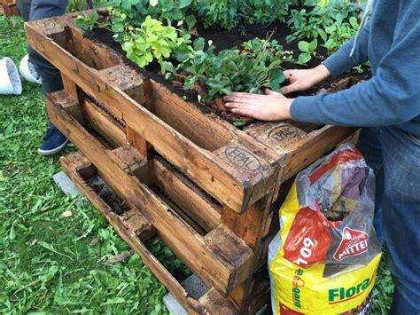 Kräuter Im Garten Pflanzen Zeitpunkt by Die Top 10 Der Besten Pflanzen F 252 R Ein Hochbeet Plantura