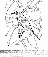 Coloring Pages Galapagos Islands Dover Landforms Colouring Publications Geography Popular Animal Doverpublications sketch template