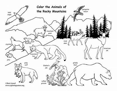 Animals Coloring Rocky Mountain Pages Animal Nature