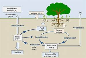 What Is The Nitrogen Cycle And Why Is It Key To Life   U00b7 Frontiers For Young Minds