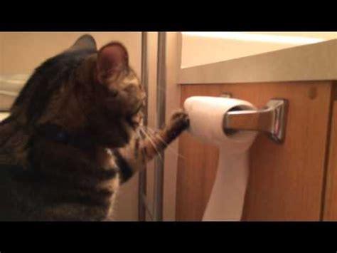 le chat qui range le papier toilette apr 232 s avoir jou 233 avec nuage ciel d azur
