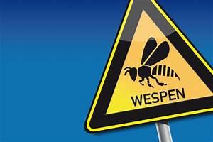 Was Tun Gegen Wespen : wespenstich wespenstich was tun kribbelbunt ~ Whattoseeinmadrid.com Haus und Dekorationen
