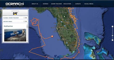 katharine  great      tracking sharks