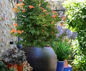 Grand Pot Plante : cultiver les plantes grimpantes en pots ou en bacs ~ Premium-room.com Idées de Décoration