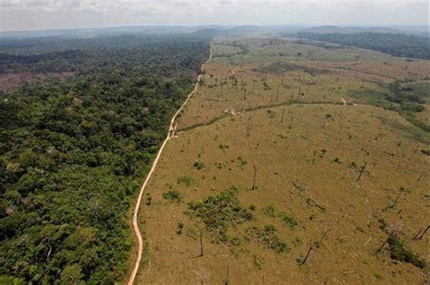 Poumon De La Planète, L'amazonie Risque L'agonie