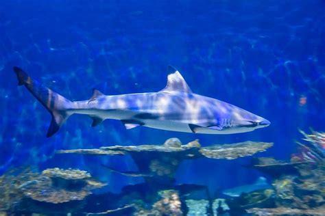 ways    close  sharks  indiana