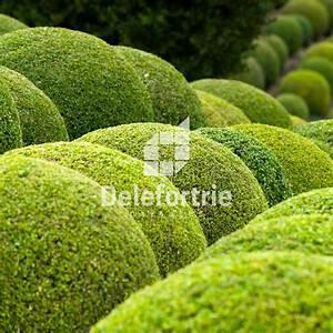 plantation de petits arbustes decoratifs tailles en boule With amenagement de petit jardin 3 arts amp paysages nos realisations