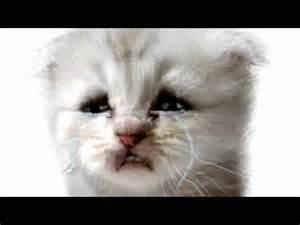 cat cry cat