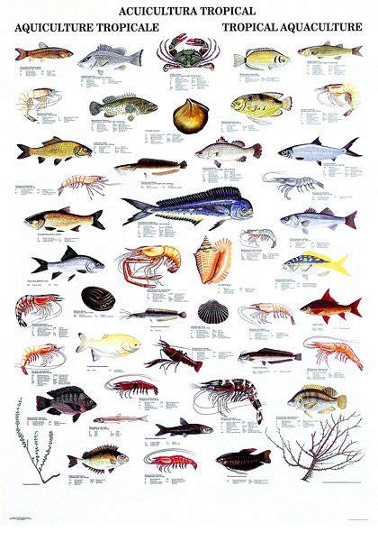 Clposttropicallargejpg (420×600)  魚  Pinterest  Fish, Fish Chart And Fishing Stuff
