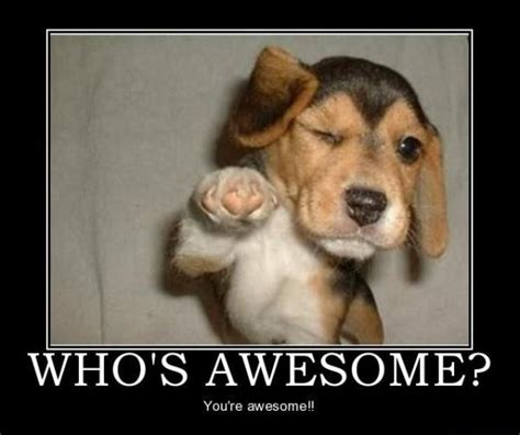 Awesome Meme Quotes - who s awesome you re awesome picture quotes