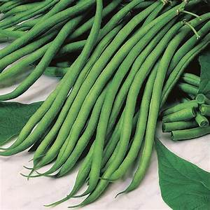 Climbing Bean Marga Seeds From Mr Fothergill U0026 39 S Seeds And