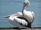 Free Images : beach, sea, coast, water, ocean, bird, wing ...