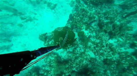 spearfishing grouper keys florida