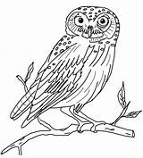 Owl Coloring Pages Printable Owls Adults Drawing Sheets Animal Snowy Line Barn sketch template