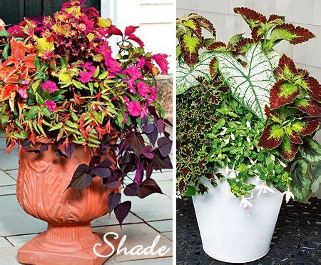 potted plants for shaded areas potted plants for shade flowers pinterest plants gardens and yards