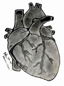 Human Heart by WhySoPlastic on DeviantArt
