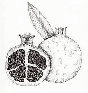 Pomegranate Punica Granatum Fruit