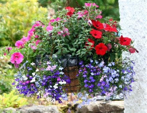 Hängepflanzen Balkon Mehrjährig by H 228 Ngepflanzen F 252 R Balkon Welche Pflanzen Sind Auf Den