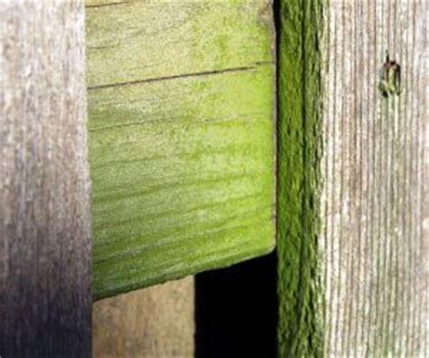 remove mold  mildew  wood