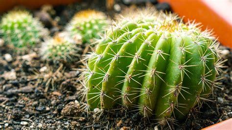 กระบองเพชร - โรงเรือนกระบองเพชร Cactus Villa