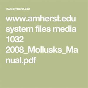 Amherst Edu System Files Media 1032 2008 Mollusks