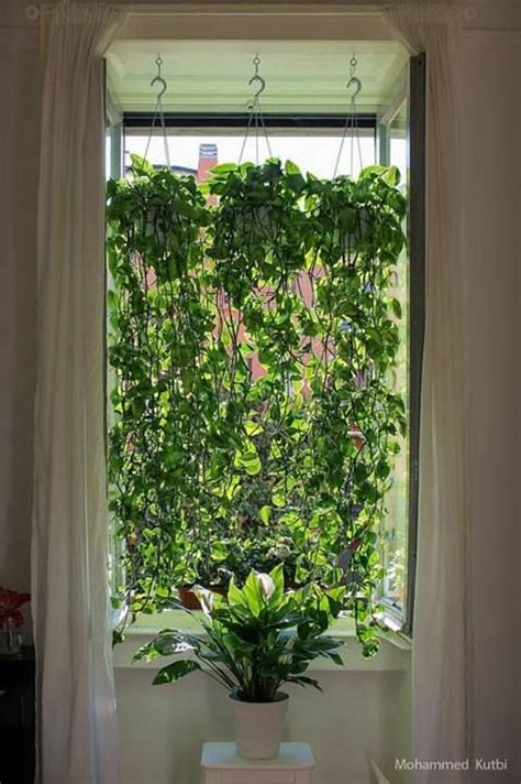 Plant Window by 1000 Ideas About Window Plants On Plant