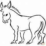 Donkey Coloring Donkeys Colouring Clipart Printable Clip Template Drawing sketch template