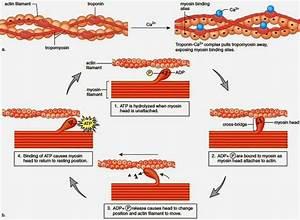 Anatomy  U0026 Physiology