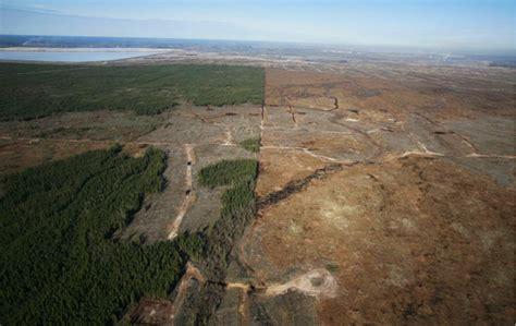 Forêt Amazonienne Déforestation Avant Après