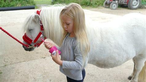 pony shetland groom age