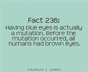 Fact Quote ~ Having blue eyes is actually a mutation ...