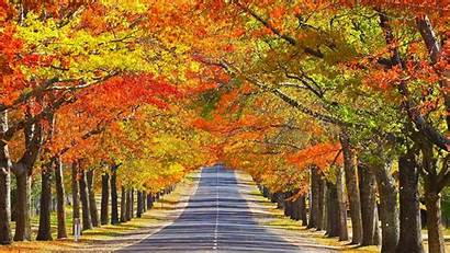 Road Autumn Fall Tree Lined Foliage Background