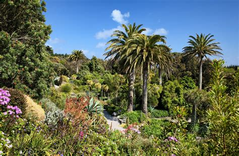 tresco abbey gardens isles  scilly cornwall guide