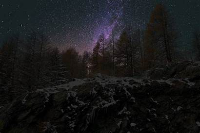 Forest Night Wallpapers Sky Dense Stars