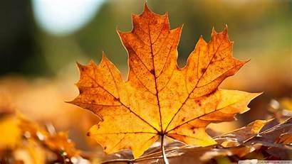 Leaves Autumn Wallpapers Fall Leaf Backgrounds Desktop