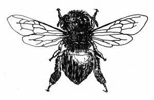Vintage Honey Bee Drawing