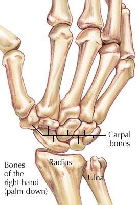 joints   upper limb anatomy  msp