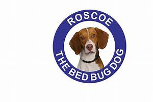 the roscoe seal of approval With bed bug canine