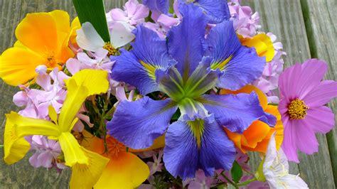 Free Widescreen Flower Wallpaper