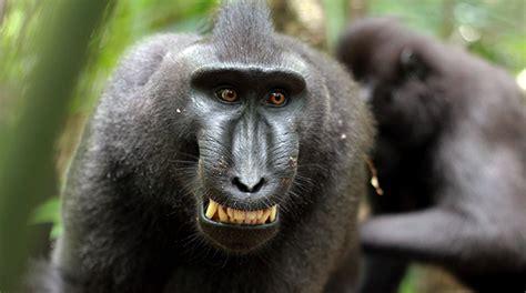 le scimmie potrebbero parlare  noi wired