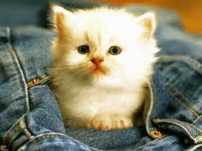 for cats free wallpapers cats wallpapers free