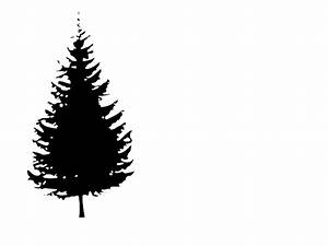 Pine Tree Clipart Black And White | Clipart Panda - Free ...